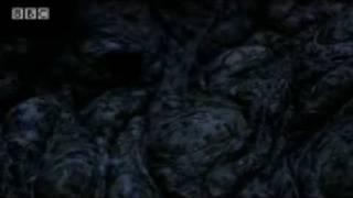 Amazing aestivation: Mugger Crocodile - King Croc - BBC Animals