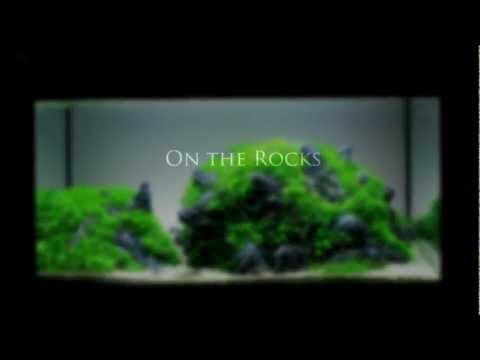 Just Aquascaping - On the Rocks