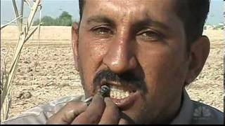 Iraqi farmer- Im addicted to eating scorpions