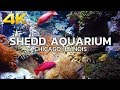 WALKING TOUR | CHICAGO - SHEDD Aquarium, John G. Shedd Aquarium, Downtown Chicago, Illinois