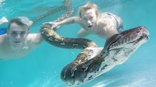 They Got Giant Snake In The Pool