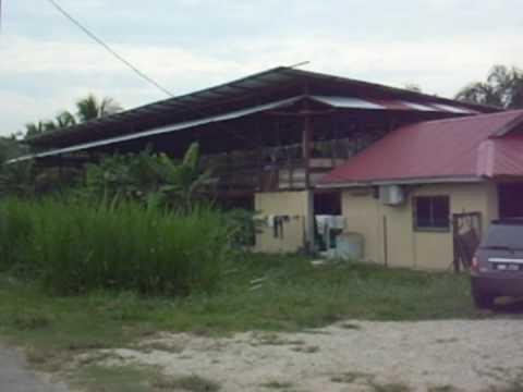 Kambing Al-Falah Farm Sdn Bhd part 1
