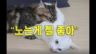 노는게 젤 좋은 귀여운 고양이동영상