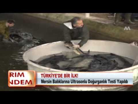 TÜRKİYE'DE BİR İLK! 29.02.2012.wmv