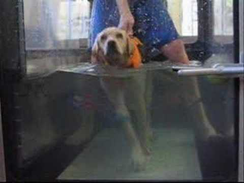 Ontario SPCA Remarkable Rehabilitation Program: Lucky dog
