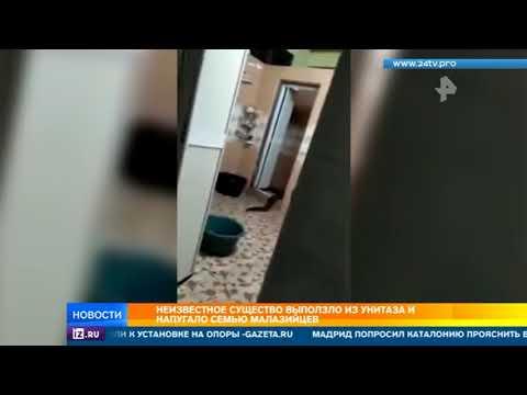 Неизвестное чудище выползло из унитаза в одном из домов в Малайзии