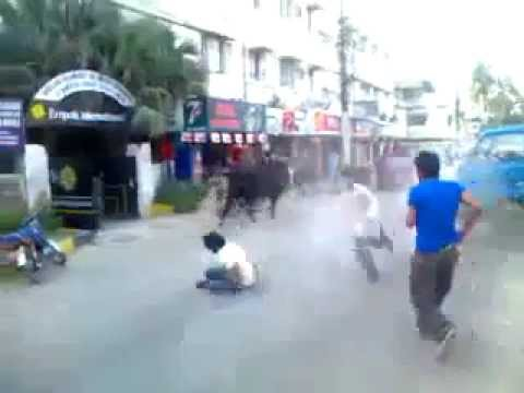 [Cow Hit and run away 2011] Video