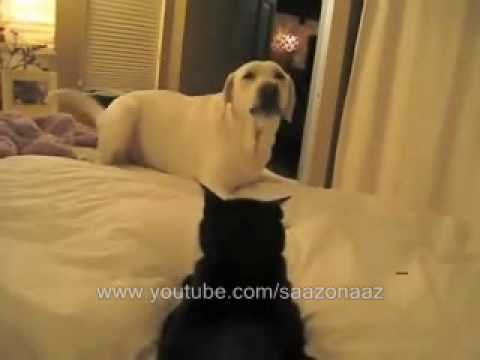funny cats and dogs video. CATS LOVE DOGS - ZUPPER