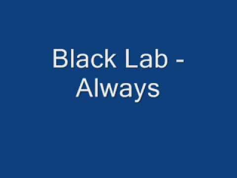 Black Lab - Always