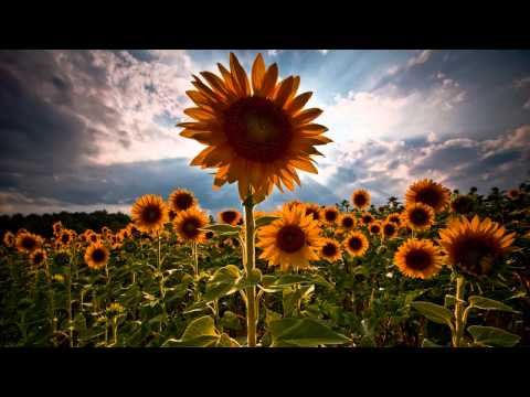 Shulman - Transmissions In Bloom (ALive mix) ᴴᴰ