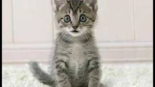 Tiny Pussy
