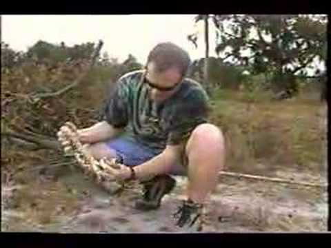 Chief Finds Florida King Snake Video
