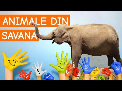 Copiii invata animale din savana africana
