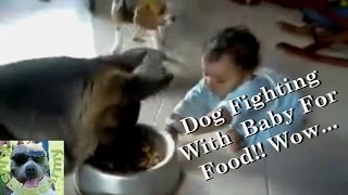 Baby Fighting With German Shepherd Over Food! Hilarious!!