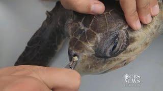 New York City considers ban on plastic straws