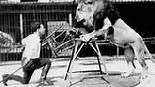 Lion Vs Tiger - Rare Footage