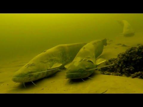 Самые Лучшие моменты прошлого сезона! Подводная охота видео.