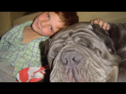 Tribute to our Neapolitan Mastiff FRANNIE (Furia Del Gheno)