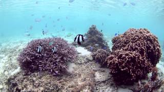 沖縄本島 大度海岸 シュノーケリング snorkeling underwater video odo beach at Okinawa island
