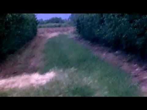BEAGLES HARE RUNNING