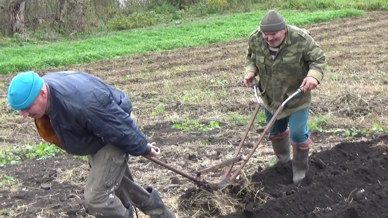 Картофель сажать под зиму 36