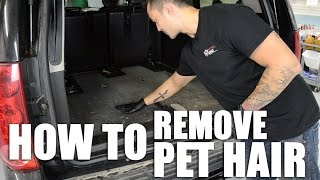 How to Remove Pet Hair From Your Car