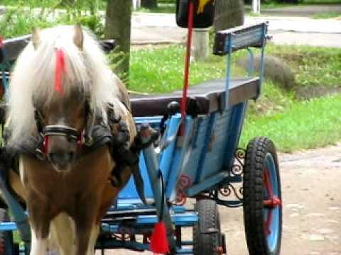 Cu poneiul prin parc
