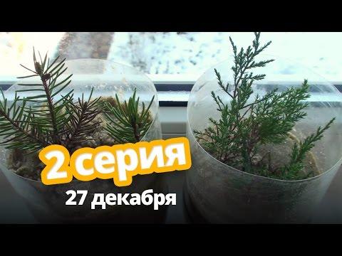 Как поживают хвойники - 2 серия ❆ 27 декабря