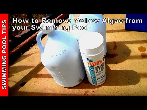 How To Remove Algae from a Swimming Pool