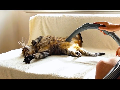 Cat Really Loves Being Vacuumed 2014
