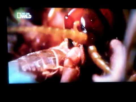 canales en HD con deco AZBOX BRAVISSIMO. en satellite amazonas con IKS...