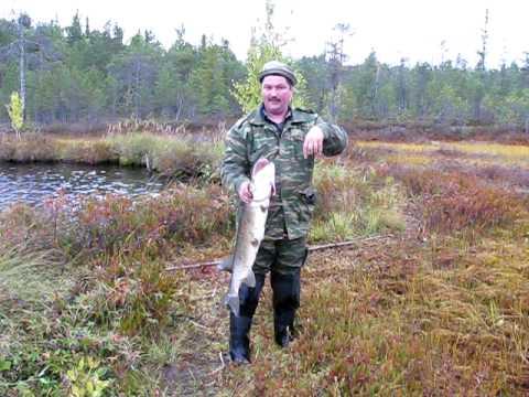 рыбалка видео на севере московской области