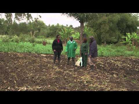 Shamba Shape Up (Swahili) - Chickens, Cows, Fake Chemicals