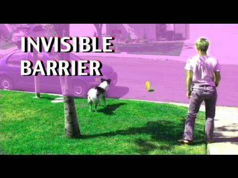 0 Invisible barriers  dog training