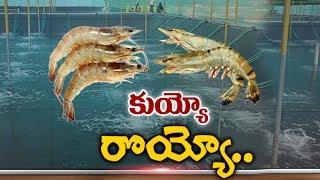 నష్టాల బాటలో రొయ్య సాగు | Aqua Farmer in Crisis | hmtv