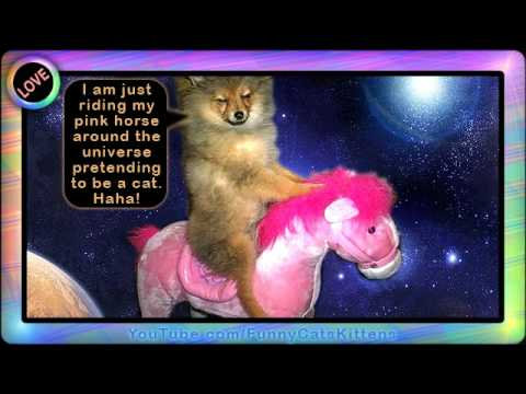 funny kitten videos. FUNNY CATS FUN VIDEOS .