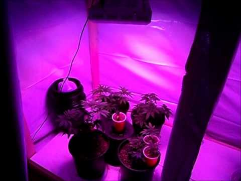 Led Grow Light 300w 1st Review Youtube