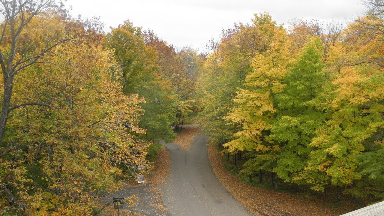 Northern Wisconsin Forest Road