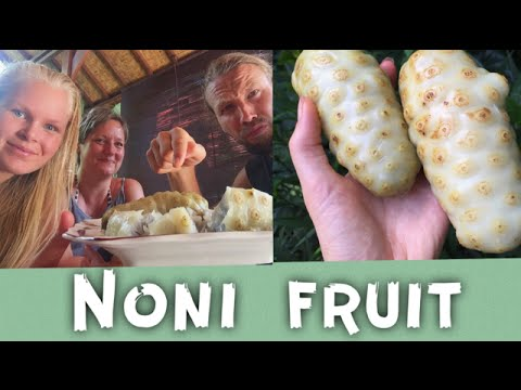 NONI FRUIT | HOW TO EAT | HEALTH BENEFITS OF NONI FRUIT