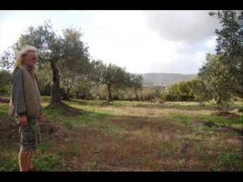 EVOOcredit - olive harvest 2009