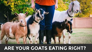 A Simple Guide to Feeding & Caring for Goats (+ meet our goats!)