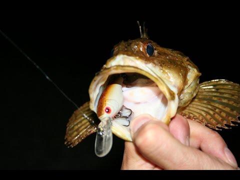 какая рыба и на что клюет рыба в черном море