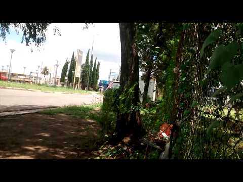 view from under the tree to the street - ventana al mundo MP3