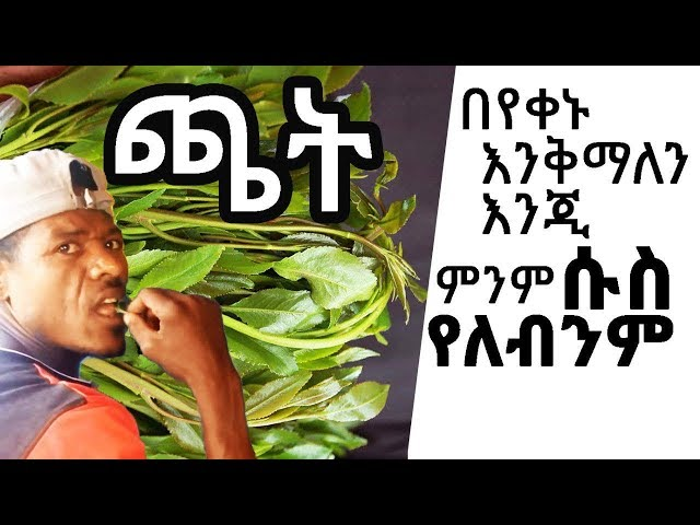 people in Addis Ababa Ethiopia chewing a mild stimulant plant leaves call Khat also spelled chat.