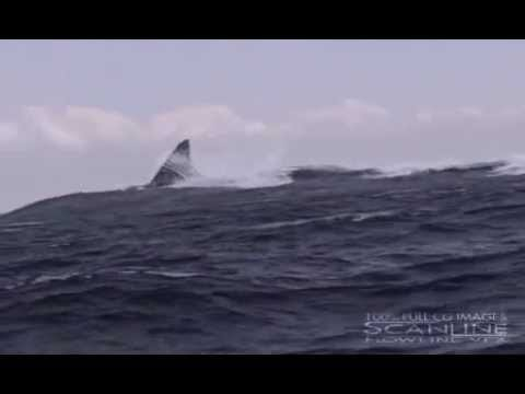 Megalodon GIANT SHARK Video