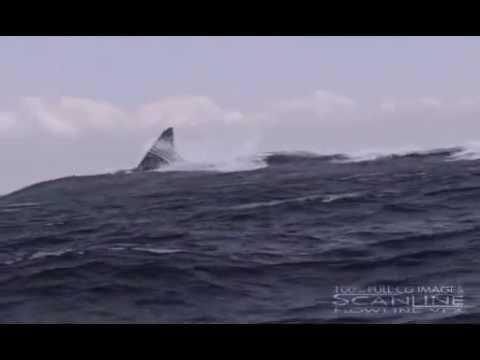 Megalodon GIANT SHARK - YouTube