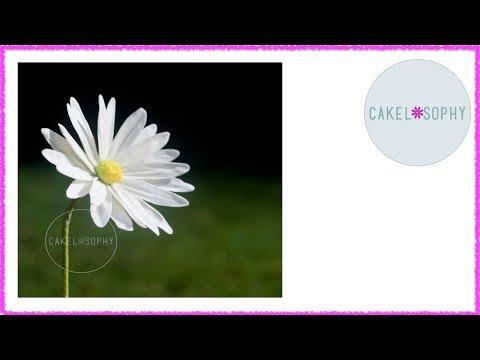 Making Modern Sugar Flowers: Wired Gumpaste Daisy