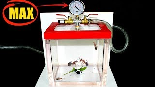 What Happens When You Put ANTS In A Vacuum Chamber? Will They Survive?
