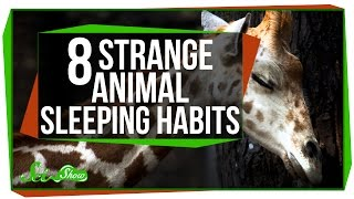 8 Strange Animal Sleeping Habits