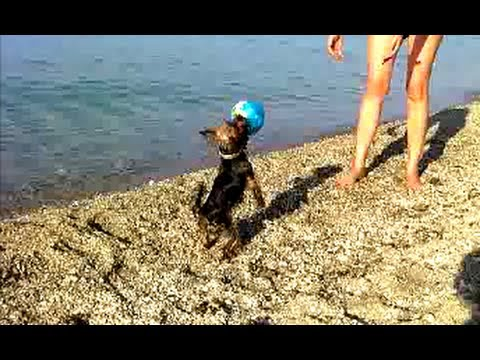 CUTE DOG plays Beach Volleyball!